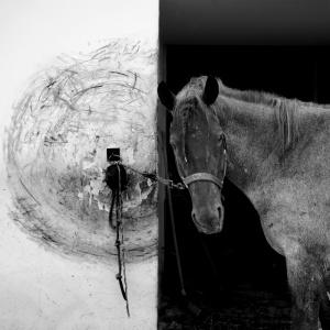 Perchè hai lasciato il cavallo alla sua solitudine?