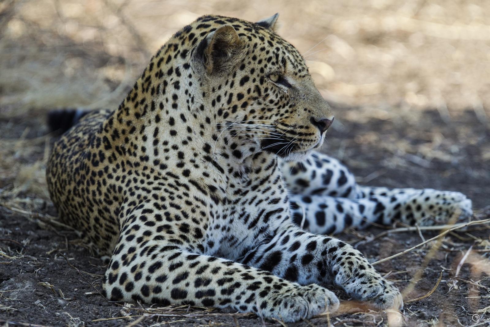 South Luangwa National Park (Zambia)